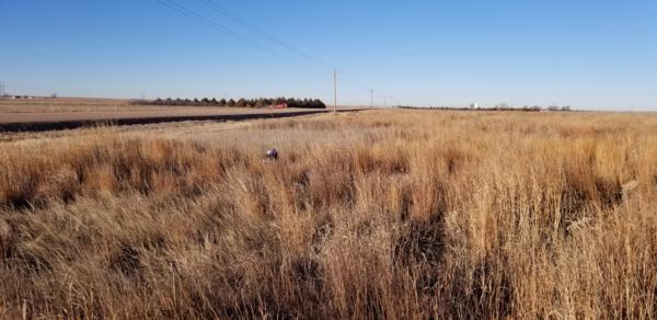 PF Mentored Pheasant Hunt